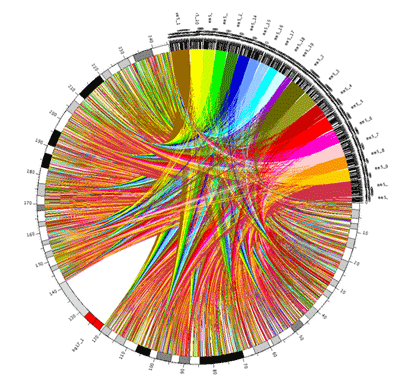 Circos - Circular Genome Data Visualization (400 x 382)