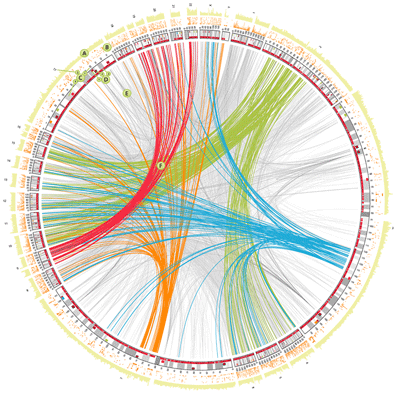 Circos - Circular Genome Data Visualization (400 x 396)