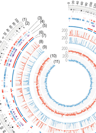 Circular genome visualization and data visualization with Circos: Mosaic genome structure of the barley powdery mildew pathogen and conservation of transcriptional programs in divergent hosts (310 x 427)