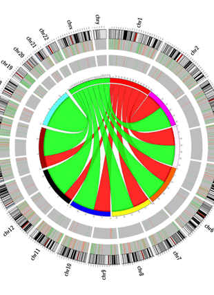 Circular genome visualization and data visualization with Circos: Serum from humans on long-term calorie restriction enhances stress resistance in cell culture (310 x 427)