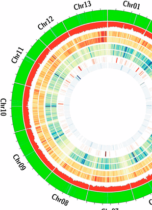 Circular genome visualization and data visualization with Circos: Insights into the Evolution of Cotton Diploids and Polyploids from Whole-Genome Re-sequencing (310 x 427)