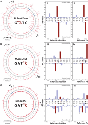 Circular genome visualization and data visualization with Circos: Characterization of DNA methyltransferase specificities using single-molecule, real-time DNA sequencing (300 x 427)