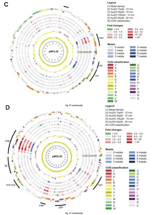 Circular genome visualization and data visualization with Circos: Mechanisms of gold biomineralization in the bacterium Cupriavidus metallidurans (310 x 427)