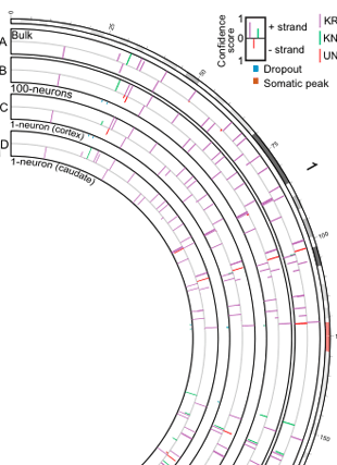 Circular genome visualization and data visualization with Circos: Single-neuron sequencing analysis of l1 retrotransposition and somatic mutation in the human brain (310 x 427)