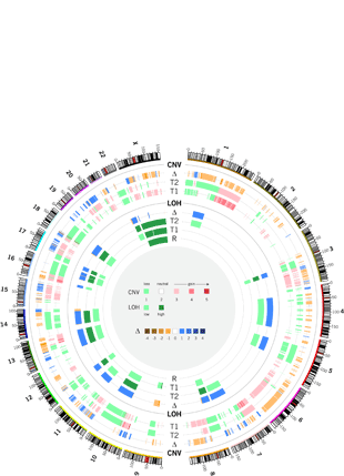 Circular genome visualization and data visualization with Circos:  (310 x 429)