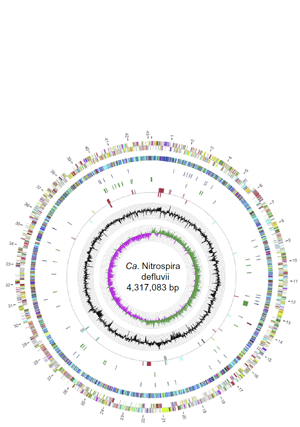 Circular genome visualization and data visualization with Circos: A Nitrospira metagenome illuminates the physiology and evolution of globally important nitrite-oxidizing bacteria (300 x 427)