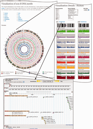 Circular genome visualization and data visualization with Circos: Non-B DB v2.0: a database of predicted non-B DNA-forming motifs and its associated tools (310 x 427)