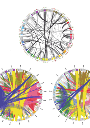 Circular genome visualization and data visualization with Circos: The fate of duplicated genes in a polyploid plant genome (300 x 427)