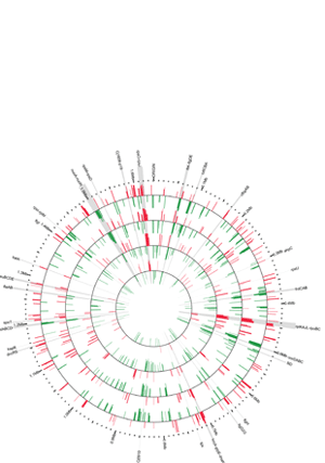 Circular genome visualization and data visualization with Circos: Use of a Rabbit Soft Tissue Chamber Model to Investigate Campylobacter jejuni - Host Interactions (300 x 427)