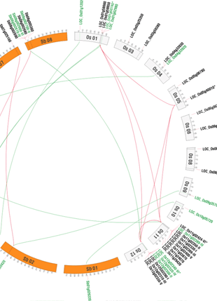 Circular genome visualization and data visualization with Circos: Insight into the Molecular Evolution of Non-Specific Lipid Transfer Proteins via Comparative Analysis Between Rice and Sorghum (310 x 429)