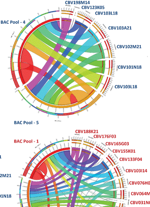 Circular genome visualization and data visualization with Circos: BAC-Pool Sequencing and Analysis of Large Segments of A12 and D12 Homoeologous Chromosomes in Upland Cotton (310 x 427)