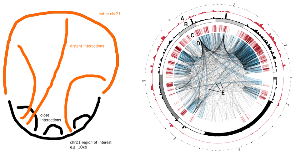 Circos - Circular Genome Data Visualization (947 x 498)