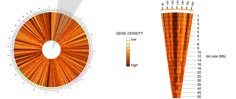 Circos - Circular Genome Data Visualization (950 x 400)