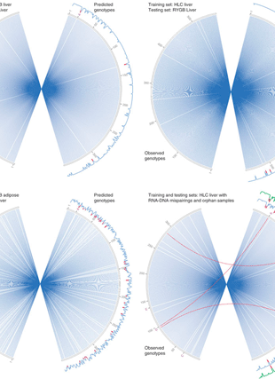 Circular genome visualization and data visualization with Circos: Bayesian method to predict individual SNP genotypes from gene expression data (310 x 427)