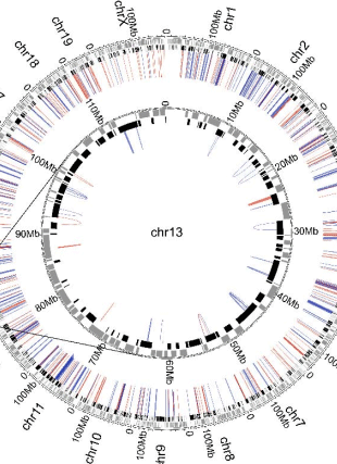 Circular genome visualization and data visualization with Circos: Cohesin-based chromatin interactions enable regulated gene expression within pre-existing architectural compartments (310 x 427)