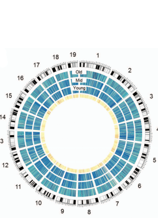 Circular genome visualization and data visualization with Circos: DNA methylation analysis of murine hematopoietic side population cells during aging (310 x 427)