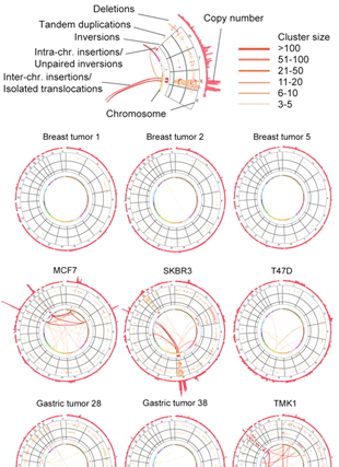 Circular genome visualization and data visualization with Circos: Comprehensive long-span paired-end-tag mapping reveals characteristic patterns of structural variations in epithelial cancer genomes (310 x 427)