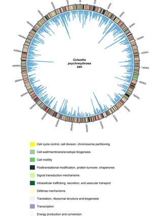 Circular genome visualization and data visualization with Circos: Microbial life in a fjord: metagenomic analysis of a microbial mat in chilean patagonia (310 x 427)