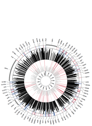 Circular genome visualization and data visualization with Circos: Identification of essential genes in C. jejuni genome highlights hyper-variable plasticity regions (310 x 427)