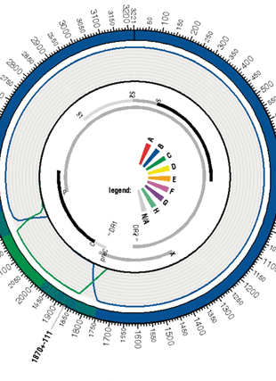 Circular genome visualization and data visualization with Circos: jpHMM: recombination analysis in viruses with circular genomes such as the hepatitis B virus (310 x 427)