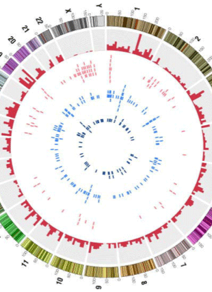 Circular genome visualization and data visualization with Circos: Variations in the exome of the LNCaP prostate cancer cell line (310 x 427)