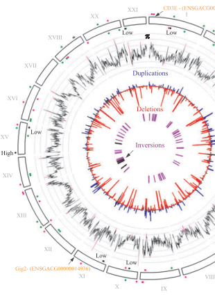 Circular genome visualization and data visualization with Circos: Genome-wide patterns of standing genetic variation in a marine population of three-spined sticklebacks (310 x 427)