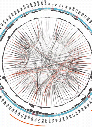 Circular genome visualization and data visualization with Circos: MISTIC: mutual information server to infer coevolution (310 x 427)
