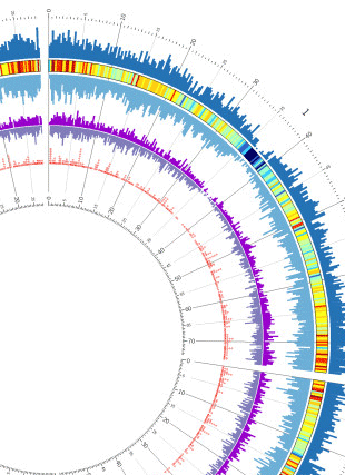Circular genome visualization and data visualization with Circos: Analysis and annotation of the hexaploid oat seed transcriptome (310 x 427)