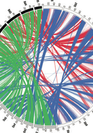 Circular genome visualization and data visualization with Circos: Comparative transcriptomics of three Poaceae species reveals patterns of gene expression evolution (300 x 427)