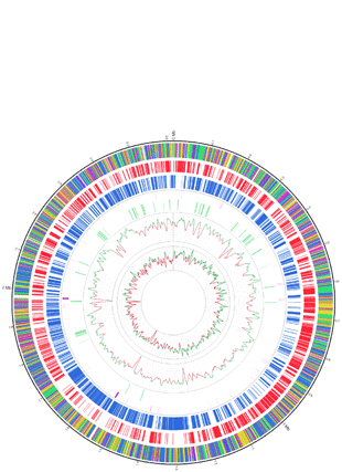 Circular genome visualization and data visualization with Circos: The Complete Genome of <italic>Propionibacterium freudenreichii</italic> CIRM-BIA1<sup>T</sup>, a Hardy Actinobacterium with Food and Probiotic Applications (310 x 427)