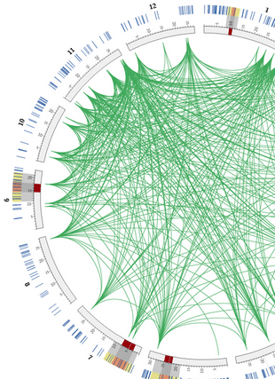 Circular genome visualization and data visualization with Circos: A computational systems biology study for understanding salt tolerance mechanism in rice (310 x 427)