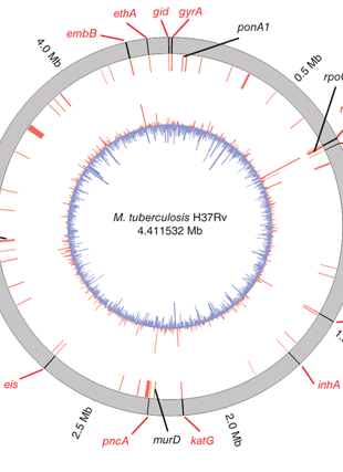 Circular genome visualization and data visualization with Circos: Genomic analysis identifies targets of convergent positive selection in drug-resistant Mycobacterium tuberculosis (310 x 427)