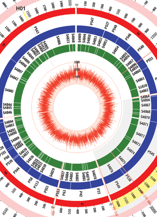 Circular genome visualization and data visualization with Circos: Advantages of Single-Molecule Real-Time Sequencing in High-GC Content Genomes (310 x 427)